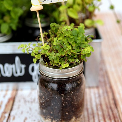 DIY Herb Garden & Plant Markers