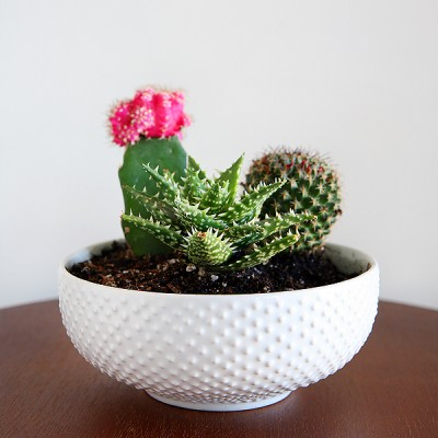 Cactus And Succulent Gift Ideas