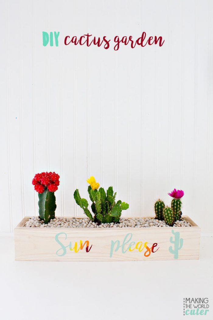 DIY Cactus Garden