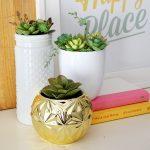 Thrifted Spring Succulent Arrangement