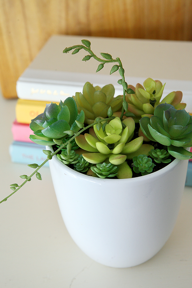 Thrifted Spring Succulent Arrangement
