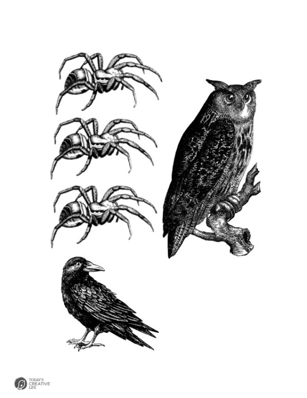 halloween graphics   Owl, crow and spiders
